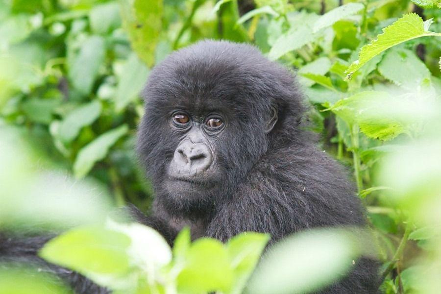 Rwanda Tours