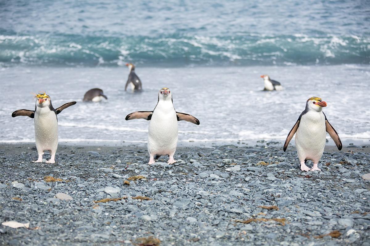 Sub-Antarctic Islands